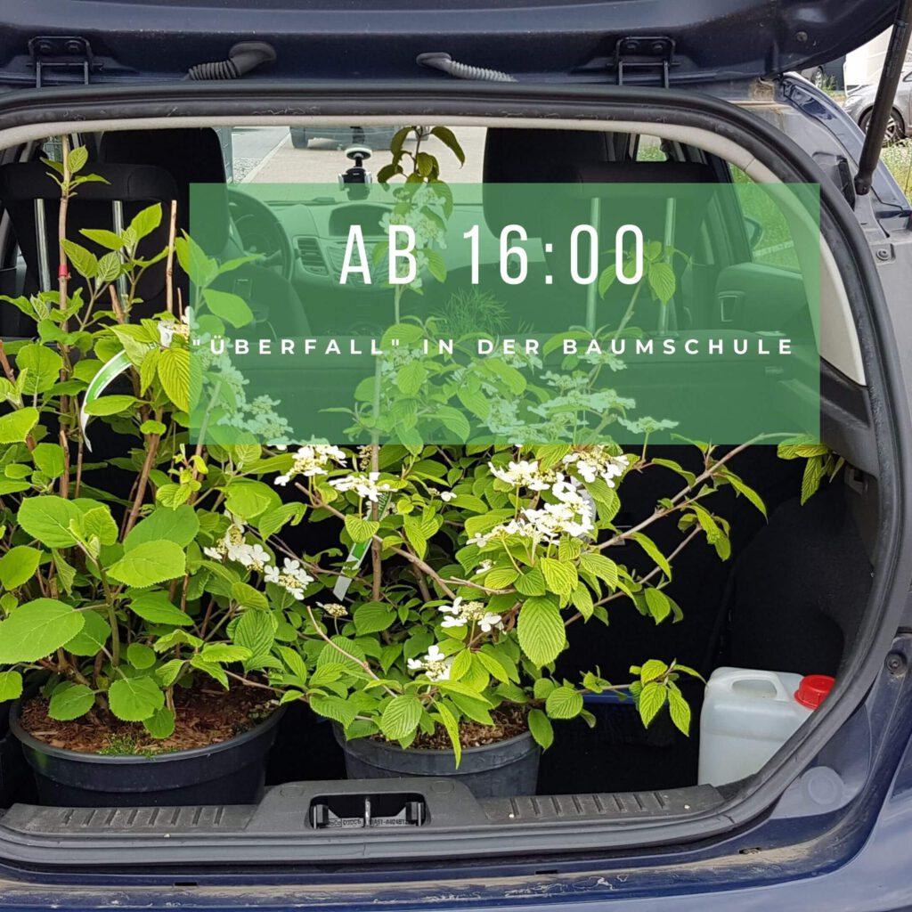 Pflanzen im Kofferraum